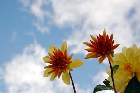 sky_flowers.jpg